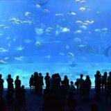 夏休みにおすすめ「泊れるスポット」(水族館・博物館・廃校・本屋さんなど)あさイチで紹介