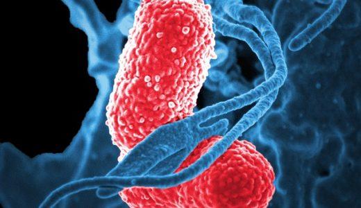 誤嚥性肺炎を防ぐ「胡椒の香り」、飲み込み力アップする食材とは?