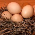 あさイチ:珠玉の卵かけご飯!エアリー卵かけご飯の作り方