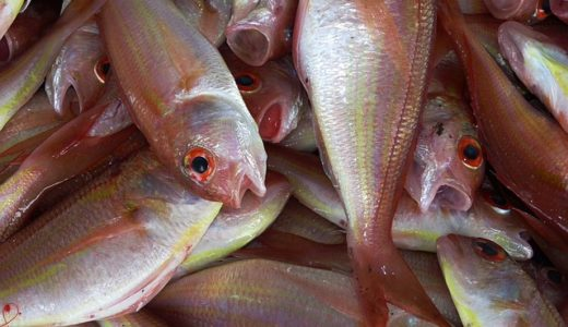 あさイチ:スゴ技Q:ウエカツ流魚の切り身の保存方法