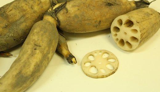 林修の今でしょ!講座:今食べるべき秋野菜!平野レミさんのレンコン三段活用バーグの作り方