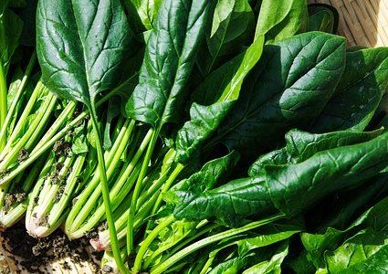 趣味どきっ!カラダ喜ぶベジらいふ:ほうれん草の栄養効果&ほうれん草チャーハンレシピ