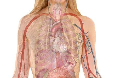 NHKスペシャル 人体 神秘の巨大ネットワーク 第1集「腎臓が寿命を決める」