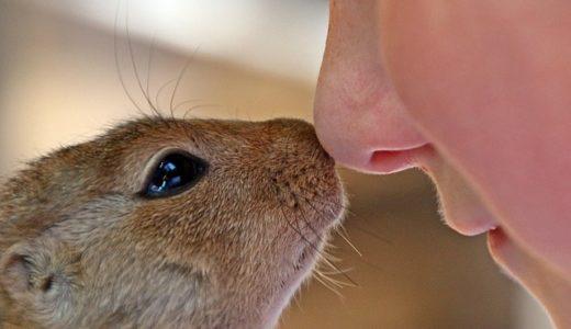 ガッテン!最新研究続々!嗅覚が衰えると元気がでなくなる?嗅覚の回復方法
