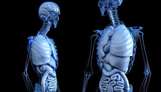 NHKスペシャル:人体 神秘の巨大ネットワーク第2集「脂肪と筋肉が命を守る」