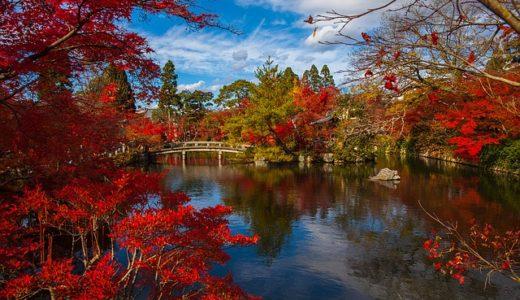 所さんお届けモノです!絶対喜ばれる秋の京都お土産