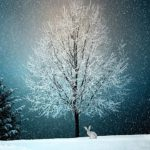 あさイチ:神戸メリケンパークに世界一のクリスマスツリー!