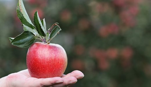 名医のTHE太鼓判!りんご揚げ餃子レシピ!1日1個のりんごが肺を若返らせる!食材総選挙2019!
