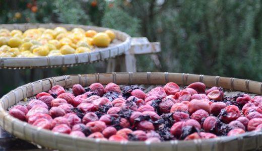 マツコの知らない世界:梅干しの世界