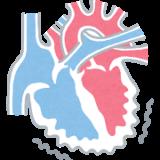 たけしの家庭の医学:心筋梗塞から身を守る毛細血管!機能をアップさせる栄養素とは!?