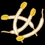 得する人損する人:ウル得フレークの作り方&にんじんしりしり&油揚げピザ&たまねぎ丸ごとあんかけ&豆苗揚げ餃子