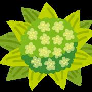 趣味どきっ!カラダ喜ぶ春ベジらいふ :ふき!フキの葉そぼろ煮レシピ