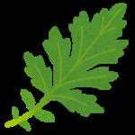 林修の今でしょ!講座:健康長寿がよく食べる山菜!血管を老けさせないよもぎの食べ方