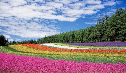 チコちゃんに叱られる!お花にはカラフルな色があるの?
