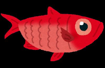 林先生の初耳学:金目鯛が赤い理由
