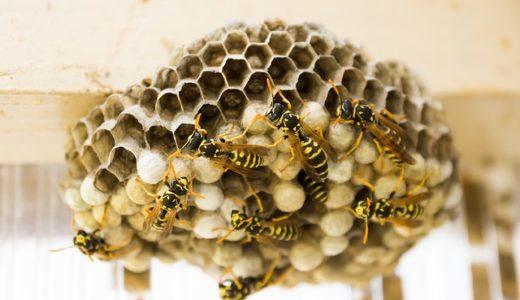 あさイチ:スズメバチに注意!猛暑で被害増加?スズメバチから身を守る方法