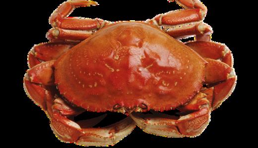 あさイチ:紅ズワイガニの素揚げレシピ!&カニの身がするっととれる方法JAPA-NAVI鳥取