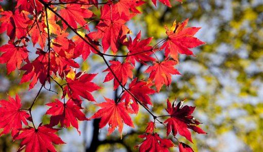 この差って何ですか?紅葉狩りは何故、紅葉を見るだけなのに狩りなの?