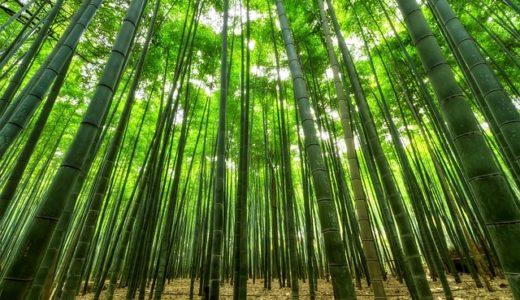 あさチャン:バイオマスプラスチックに世界が注目!放置竹林活用ビジネス