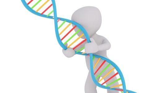 """NHKスペシャル!人体II遺伝子:あなたの中の宝物""""トレジャーDNA"""