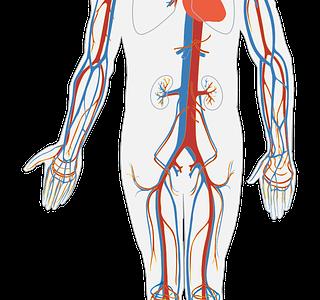 初耳学:血管が青く見えているのは目の錯覚!?