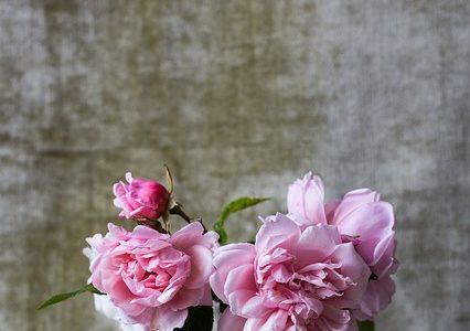 世界一受けたい授業:フラワーボックスの作り方!ニコライバーグマン先生による暮らしを劇的に変える花のトリセツ