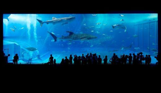 チコちゃんに叱られる!水族館のサメは同じ水槽の魚をなぜ食べないの?
