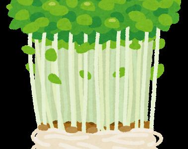 あさイチ:豆苗再生栽培のコツ