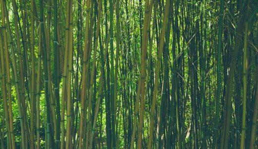 あさチャン:バンブークリア!竹と水でできた天然由来の大ヒット洗剤の紹介