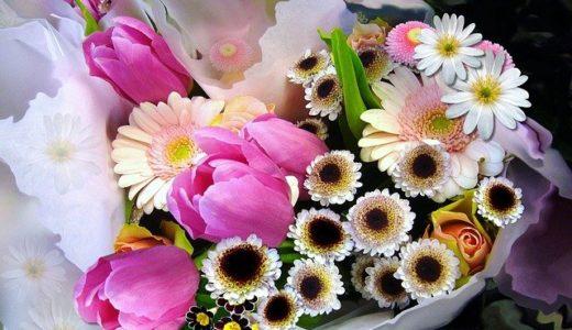 所さんの目がテン!おうちで切り花を長持ちさせる方法!魔法の水の作り方